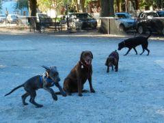 Dog Park-Charleston
