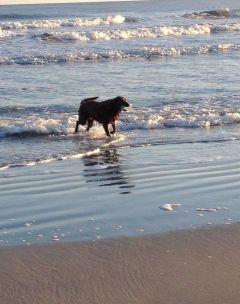 Ocean swim!