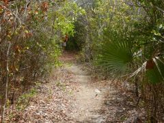Trail to Adderly Plantation ruins