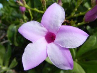 Bahama blooms!