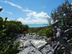 Trail across Cay to ocean
