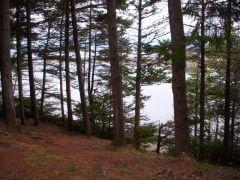 Jewell Is. shoreline