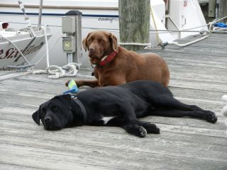 Molly & Black Dog chilling on the pier