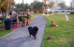 Dog park last night