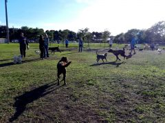 Vero Dog park