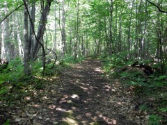 Beausoleil Island trail