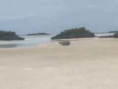 Stranded dinghy! High & dry!