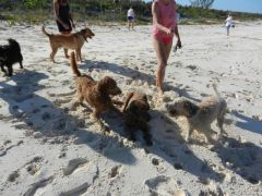 Conception Island dog party!