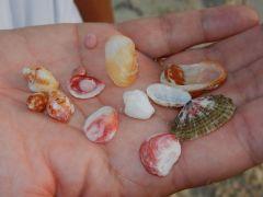 Some found treasure!