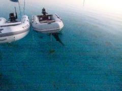 Shark hiding under dink #2.