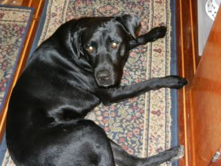 'Black Dog'- 'zis my new digs?'