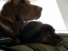 Sammie and Cody- best buds!