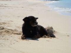 Sammy relaxes on the beach.