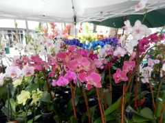 Beautiful colors in orchids!