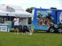 Real Frisbee Dog!
