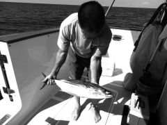 Nice skipjack tuna, OK eating.